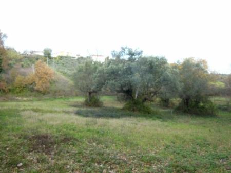 Terreno Agricolo Cepagatti
